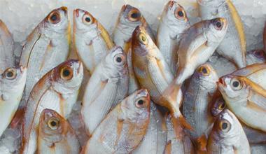 itauk-course-seafood